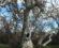 hobbit-tree