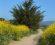 trail-heading-south